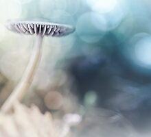 Dreamy Mushroom by Bob Daalder