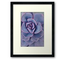 Purple Pearl Framed Print