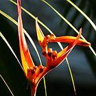 flower III - flor by Bernhard Matejka