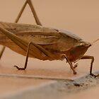 grasshopper - saltamontes by Bernhard Matejka