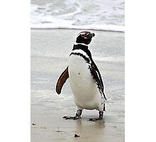 Magellanic Penguin Strolling on the Beach Photographic Print
