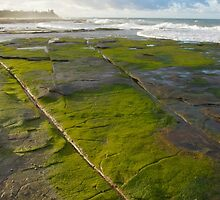 Green algae sandstone. Caloundra. by Ian Hallmond