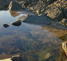 Rock-pool and fish. Hastings Point. by Ian Hallmond