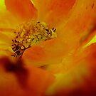 Warm colors by Ana Belaj