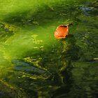 Leaf on pond ... Colorado Springs by dfrahm