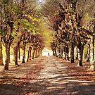 Path 2 by Danuta Antas