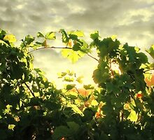 Last Light in Napa by Ellen Cotton