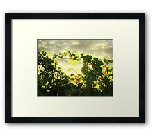 Last Light in Napa Framed Print