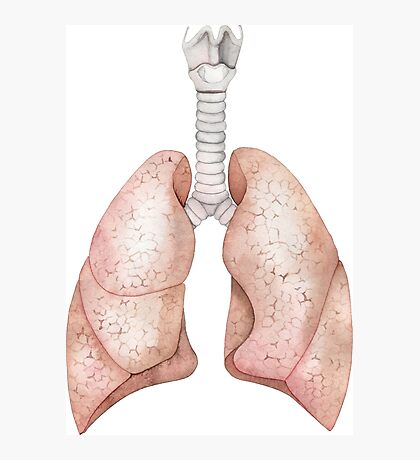 Watercolor lungs Photographic Print