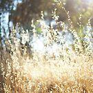 It's Summer! by LouJay