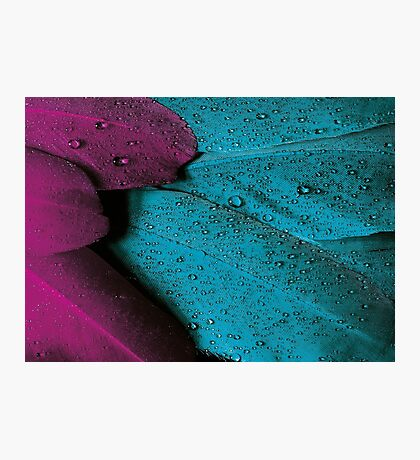 Teal Plum Wet Feather Photographic Print