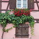 Windows and Grapevine by Yair Karelic