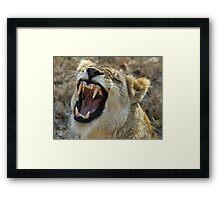 A very verbal lioness! Framed Print