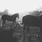 Two horses by Hudolin
