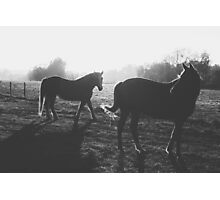 Two horses Photographic Print