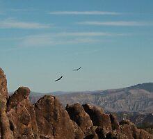 California Condors by jmaack