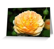 Light orange and yellow rose Greeting Card