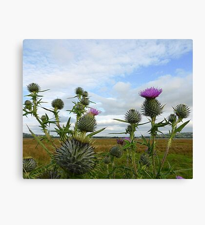Irish Thistles Canvas Print