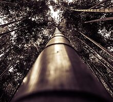 Bamboo Forest by xDenisx