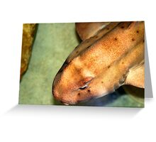 Horn Shark Greeting Card