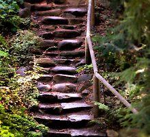 Old Wet Stone Steps by Henrik Lehnerer