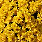 Golden Mums by Cynthia48