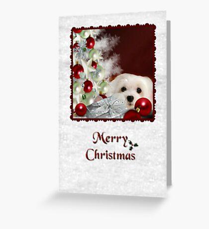 Snowdrop the Maltese Christmas Card Greeting Card