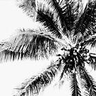 Palm by njordphoto