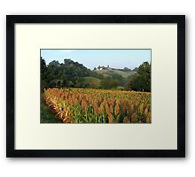 Sorghum country Framed Print