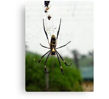 ID Spider Canvas Print