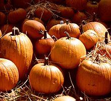 Pumpkin Patch by njordphoto