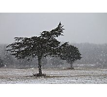Snow Squall  Photographic Print
