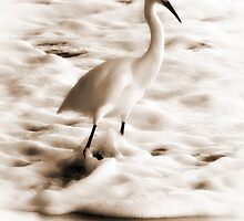 Snowy Egret in Sepia by Christina  Ochsner