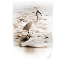 Snowy Egret in Sepia Poster