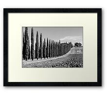 Tuscan Cypresses Framed Print