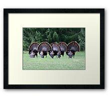 Wild turkey mating dance Framed Print