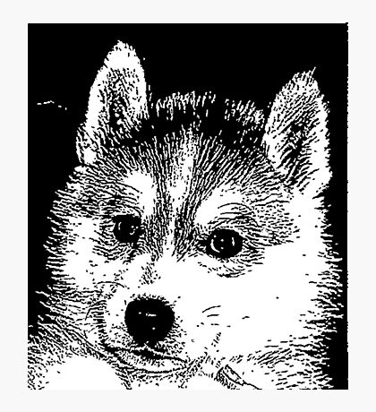 Husky puppy Photographic Print