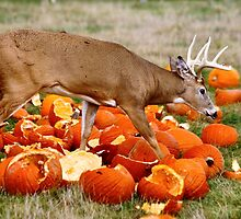 Deer and pumpkins by Maryna Gumenyuk