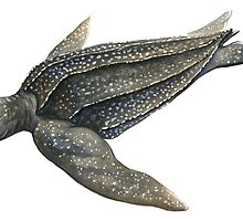Leatherback Sea Turtle by Suzannah Alexander