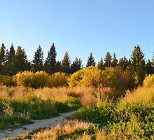 GOLDEN FALL COLORS IN BIG BEAR by CHERIE COKELEY