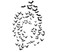bats & butterflies  Photographic Print