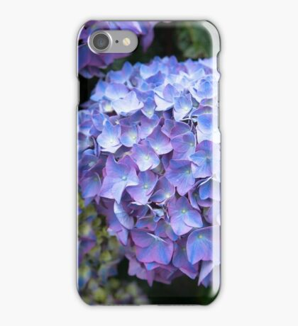 Blue-lilac hydrangeas (hortensias) iPhone Case/Skin