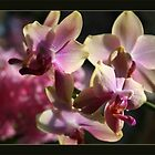 orchids by LisaBeth