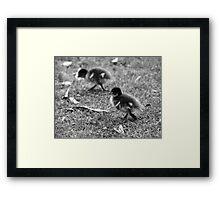 Duckling - life is precious - cherish Framed Print
