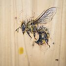 Bee #5 by Fay Helfer