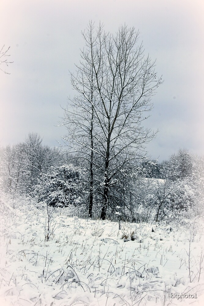 On A Winter's Day by kkphoto1