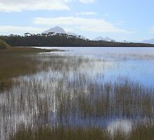 Melaleuca Lagoon by Carole-Anne