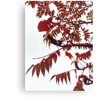 Autumn Leaves turning Red Canvas Print