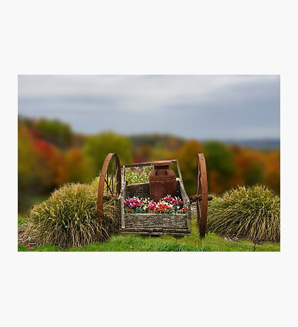 Flower Wagon Photographic Print