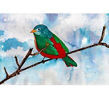 Bright Bird Photographic Print